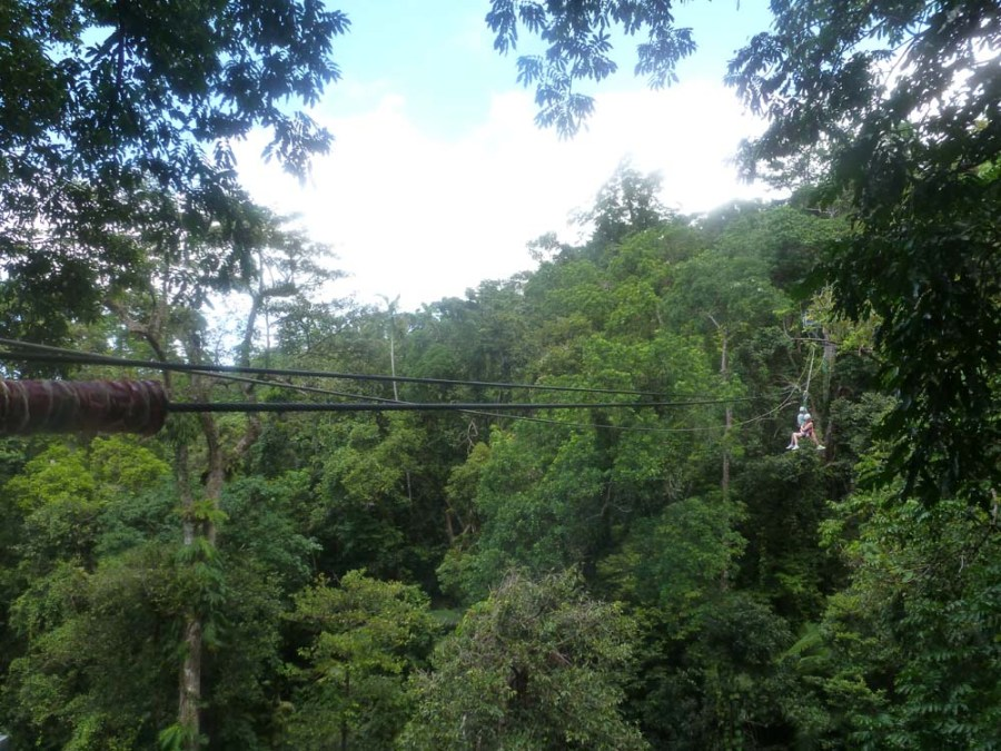 AUSTRALIA - Ziplining in the Daintree Rainforest